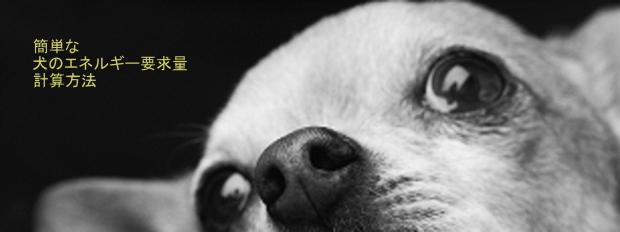 犬の体格に合わせたエネルギー要求量の計算方法